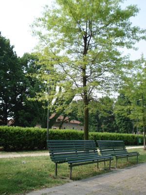 Park11